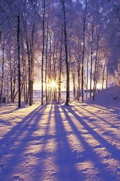 A wonderful winter pic