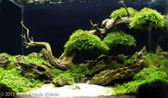 2013 AGA Aquascaping Contest - Entry #601