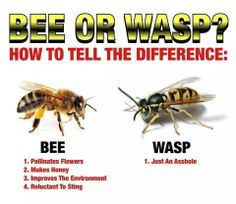 The real difference between bees and wasps.