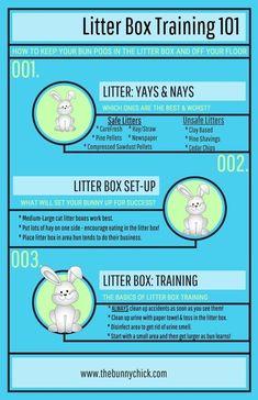 Litter Box Training for Rabbits - Kaninchen Mini Lop Bunnies, Dwarf Bunnies, Baby Bunnies Care, Lionhead Bunnies, Angora Bunny, Holland Lop Bunnies, Lionhead Rabbit, Funny Bunnies, Rabbit Litter Box