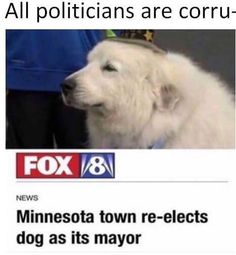There's all these places with animals as their mayors but like, who actually makes the decisions? Or do they just have to papers that say yes and no and see which one the animal sniffs?