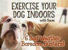 Indoor dog exercises