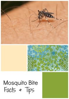With the increase of concern for the in the US, knowing how to protect yourself from mosquitoes is important. Get the facts here. Mosquito Bite Relief, Zika Virus, Mosquitoes, How To Protect Yourself, Pest Control, This Is Us, Facts, Health, Tips