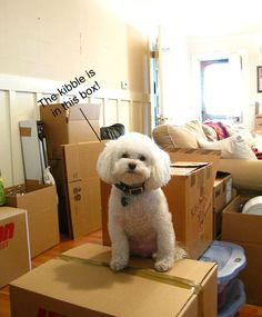 Tips for unpacking after a move. What to unpack first?