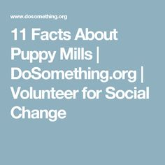 11 Facts About Puppy Mills | DoSomething.org | Volunteer for Social Change