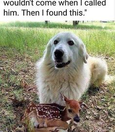 The best dog memes of 2019 by Small Animals. Enjoy the funny dogs meme. Cute Animal Memes, Cute Animal Pictures, Cute Funny Animals, Funny Animal Humor, Funny Dog Memes, Funny Dogs, Cat Dog, Cute Stories, Cute Little Animals