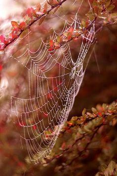 Spinnenweb in de herfst.
