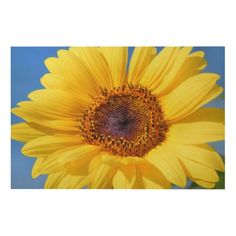 Sunflower Flower, Sunflower Seeds, Floral Flowers, Sunflower Gifts, Art Flowers, Free Photos, Free Images, Coffee With Friends, Old Farmers Almanac