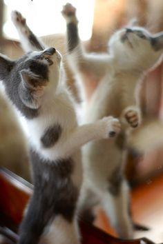 let's dance #kittens