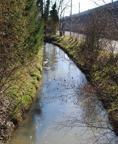 Bereits 1999 wurde mit der Revitalisierung des Aumühlbaches in Pichling begonnen. Dabei wurde im Auftrag der Stadt Linz eine durchgehende Gewässerverbindung zwischen dem Freindorfer Mühlbach und dem Mitterwasser in den Traun-Donau-Auen hergestellt. Nun ist das Projekt beendet. Country Roads, Planting Shrubs, Types Of Animals, Linz, City