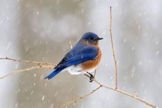 Winter Blue Bird by Miles Pro Photo on 500px