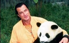 Steven Seagal Is the Lamest Guy Ever Steven Seagal, Do I Love Him, Demotivational Posters, The Expendables, Martial Artist, Film Director, Famous Faces, Panda Bear, Beautiful Men