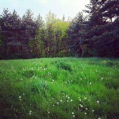 0x378: Louka / Meadow