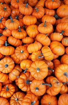 Orange Aesthetic Discover 5 Stock Photo Images of Pumpkins and Gourds with Vibrant Color Variations 5 Stock Photo Images of Pumpkins and Gourds including White Mini Pumpkins small pie pumpkins multi colored gourds in a farmers market setting. Cute Fall Wallpaper, Wallpaper Free, Orange Wallpaper, Halloween Wallpaper Iphone, Iphone Background Wallpaper, Halloween Backgrounds, Aesthetic Iphone Wallpaper, Aesthetic Wallpapers, Fall Backgrounds Iphone