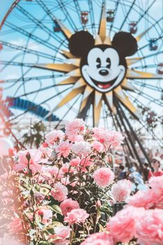 We absolutely love DisneyLand♥️ Comment which one is your favorite Disneyland or Disney world 🌎