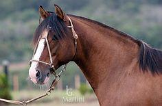 #Caballos | José Guilherme Martini | Cavalos crioulos