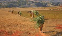 Orissa (gemaakt in Odisha)
