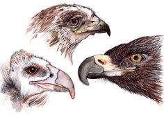 Bird studies by krisztiballa #krisztiballa #illustration #penandink #nature #birds #details #drawing