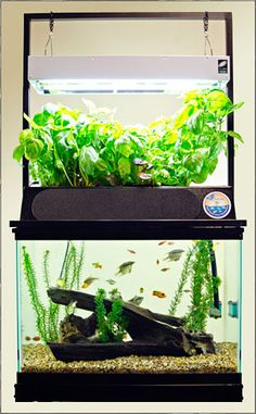 ECO-Cycle Aquaponics Kit -- I don't have a 20 gallon aquarium, but if I ever do I'd REALLY like to try this. :-)