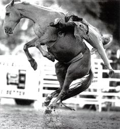 "How would you translate ""riding a bucking bronco"" into PT ? In rodeos of the U. West bareback bronc riding is a major event. Rodeo Cowboys, Real Cowboys, Cowboy Horse, Cowboy And Cowgirl, Cowboy Baby, Bull Riding, Horse Riding, Bareback Riding, Rodeo Time"