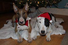 Christmas Bullies :)
