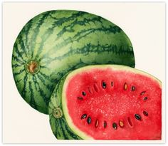 Best watermelons ever. Watermelon - in SW Louisiana, get Sugartown Melons. In Mississippi, pick up a Smith County watermelon. Unusual Holidays, Daily Holidays, Watermelon Patch, Watermelon Art, National Watermelon Day, Best Fruits, Summer Fruit, Art Themes, Stone Painting