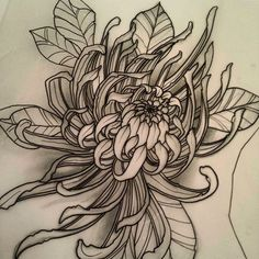 Japanese Flower Tattoo, Japanese Flowers, Flower Tattoo Designs, Flower Tattoos, Crisantemo Tattoo, Crysanthemum Tattoo, Chrysanthemum Drawing, Rite De Passage, Tattoo Fleur