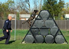 K9 Handler Academy | K9 exercises at the new training field in West Sacramento (photo by ...