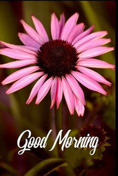 Good Morning Wishes Friends, Morning Blessings, Good Morning Good Night, Good Morning Quotes, Start The Day, Corporate Gifts, Pretty Flowers, Morning Coffee, Blessed