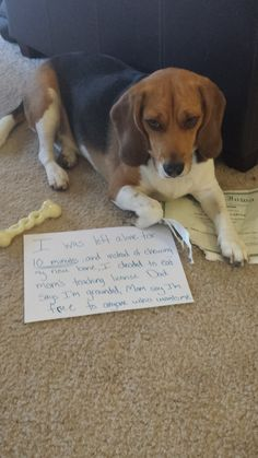 Dog Shame...teaching licenses are expensive!