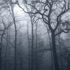 Histoires Naturelles by Juliette Bates,