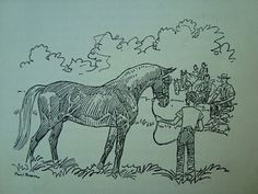 How many of us remember all the fabulous horse books that Paul Brown illustrated.