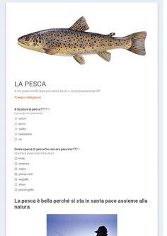 1E Alberghiero - SONDAGGIO PUBBLICO - Community - Google+ Sondaggio sulla pesca pubblico