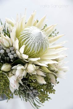 The white King protea. Absolutely beautiful and just as rare the white king is totally fabulous no matter what you decide to do with it. Lily Bouquet Wedding, Protea Wedding, Bride Bouquets, Protea Bouquet, Protea Flower, Flor Protea, Protea Centerpiece, Creative Flower Arrangements, Australian Native Flowers
