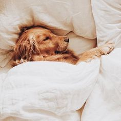 Some of the things we admire about the Trustworthy Golden Retriever Puppies Cute Baby Animals, Animals And Pets, Funny Animals, Cute Dogs And Puppies, I Love Dogs, Doggies, Cutest Dogs, Lab Puppies, Tier Fotos