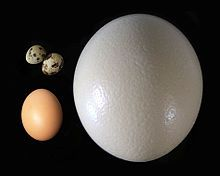 Egg (food) - Wikipedia, the free encyclopedia