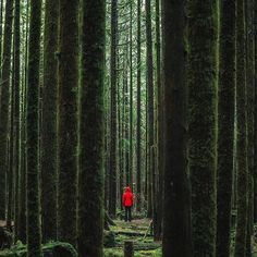 Golden Ears Provincial Park British Columbia | By @michaelmatti #TheProTraveler by theprotraveler Outdoor Art, Outdoor Life, Outdoor Living, Outdoor Photography, Nature Photography, Travel Photography, Visit Vancouver, Park Photos, Facebook Image