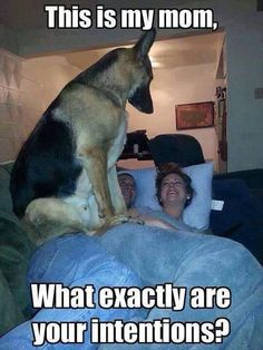 Check out these 17 funny dog pictures that will make you laugh Funny Animal Memes, Cute Funny Animals, Dog Memes, Funny Animal Pictures, Dog Pictures, Funny Dogs, Funny Memes, Funny Photos, Dog Humor