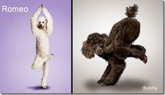 funny interesting yoga dog puppy pictures (10)