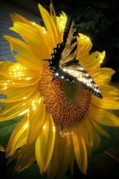 Image in Butterfly World collection by Cristela Uploaded by Cristela. Find images and videos about butterfly sunflower and flowers on We Heart It - the app to get lost in what you love.