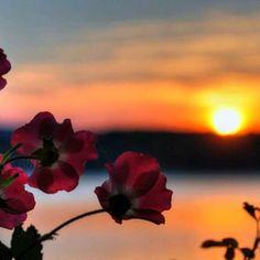 الشمس قبيل الغروب احقا نغسها قبيل الشروق. ولكن اليس ممتعا ان نحظى بنفس المشهد مرتين في اليوم!