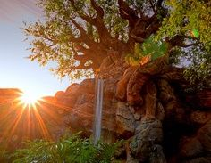 Relax and enjoy this sunset from Disney's Animal Kingdom.