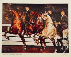 Gaines Denmark 61 | The American Saddlebred Museum