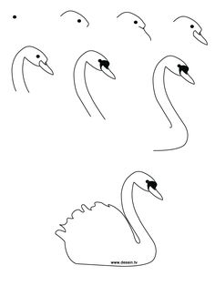 Drawing realistic Birds Step by Step | learn how to draw a swan with simple step by step instructions
