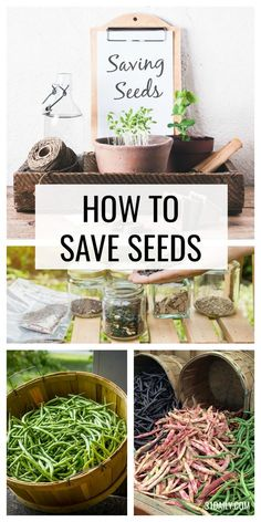 Late summer, early autumn is the perfect time for saving seeds from your garden. If you love to garden, chances are you have favorite flowers, fruits, and vegetables you'd like to grow year after year