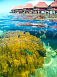 Underwater paradise in the Moorea lagoon - French Polynesia