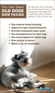 My cat and dog fight how do i stop it daisy pinterest dog the old adage you cant teach an old dog new tricks is wrong teaching your older dog actually increases cognitive function and creates a healthier fandeluxe Epub