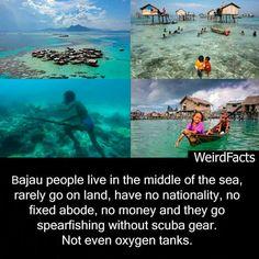 The Bajau People