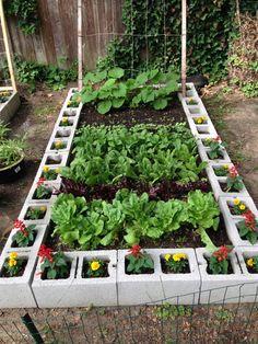 Backyard Vegetable Gardens, Vegetable Garden Design, Cinder Block Garden, Garden Ideas With Cinder Blocks, Raised Garden Beds Cinder Blocks, Brick Garden, Wooden Garden, Design Jardin, Starting A Garden