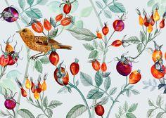 #Illustration #Birds & Fruits #EmmaLöfström